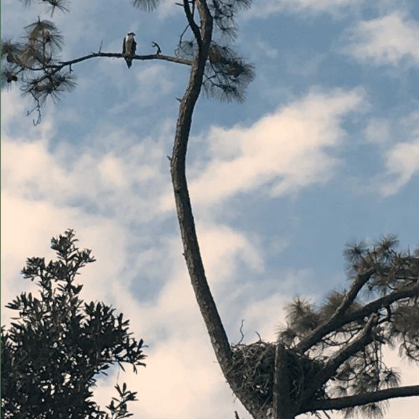 Big Lagoon State Park, Florida.