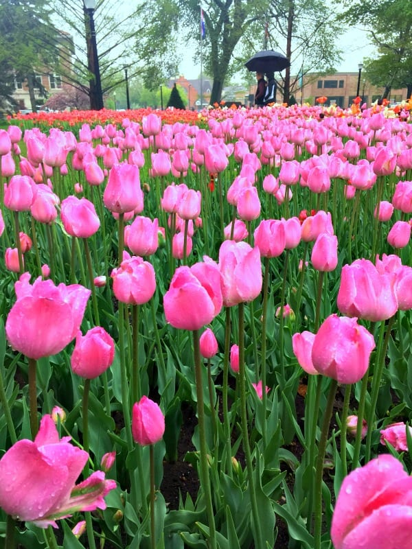 A Day Trip To Holland Michigan: Tulips, Beaches, And Big Red Lighthouse