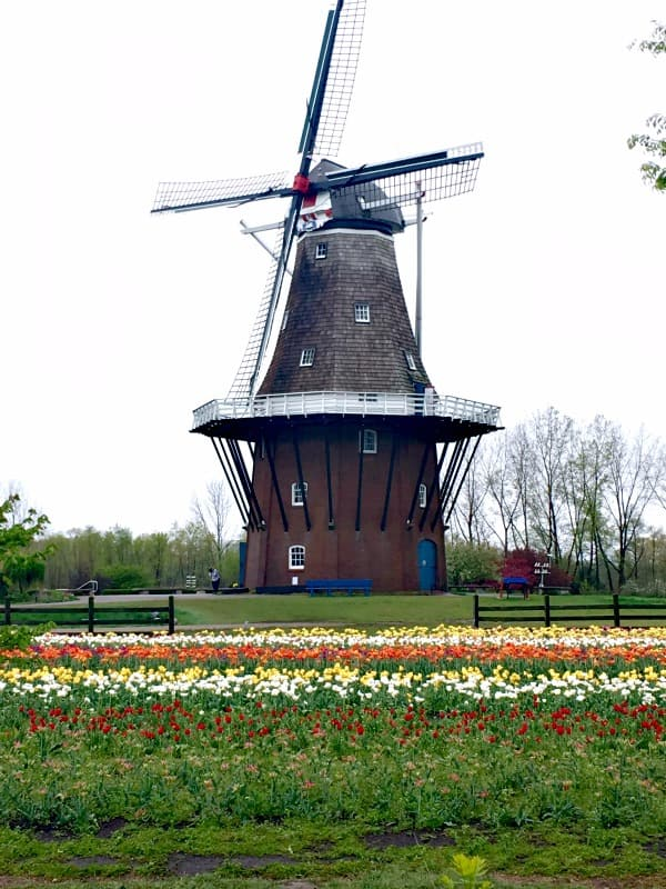 Fully working windmill with a working flour mill and miller inside at Windmill Island.