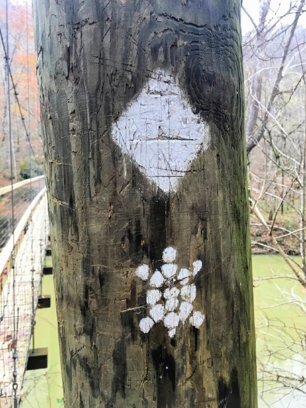 Markings for the Sheltowee Trace Trail in Daniel Boone National Forest